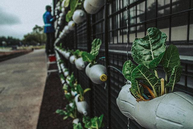 plastic bottles hold plants